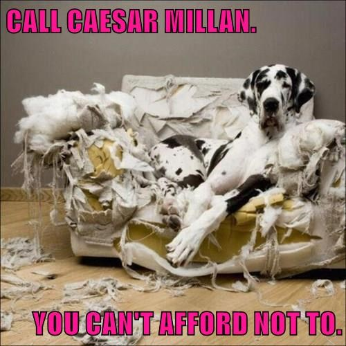 CALL CAESAR MILLAN.  YOU CAN'T AFFORD NOT TO.