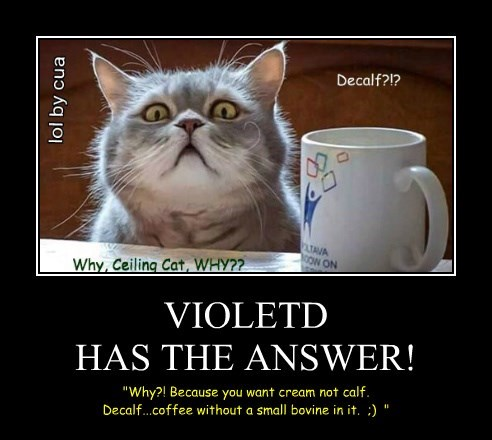 VIOLETD HAS THE ANSWER!