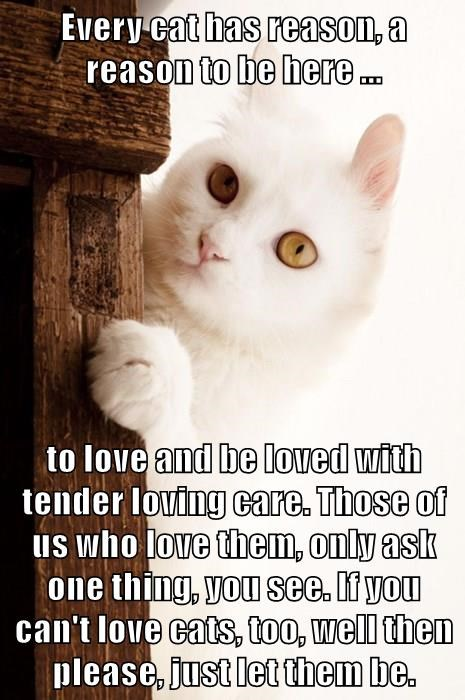 Every cat has reason, a reason to be here ...  to love and be loved with tender loving care. Those of us who love them, only ask one thing, you see. If you can't love cats, too, well then please, just let them be.