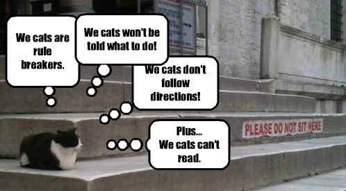 The real reason cats don't obey signs.