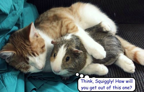 Think, Squiggly! How will you get out of this one?