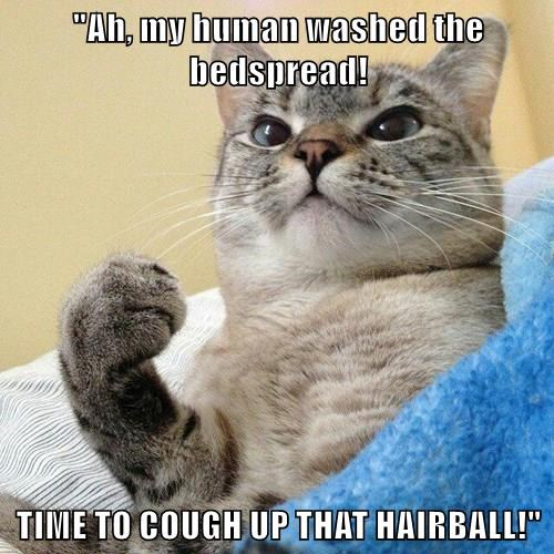 """""""Ah, my human washed the bedspread!  TIME TO COUGH UP THAT HAIRBALL!"""""""