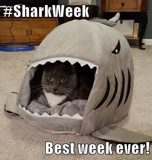 #SharkWeek  Best week ever!