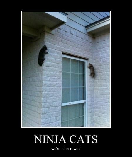 NINJA CATS