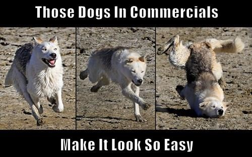 Those Dogs In Commercials  Make It Look So Easy