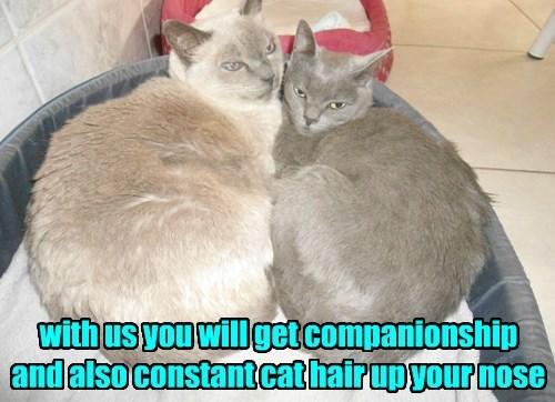 Cat Commitments Are Precious