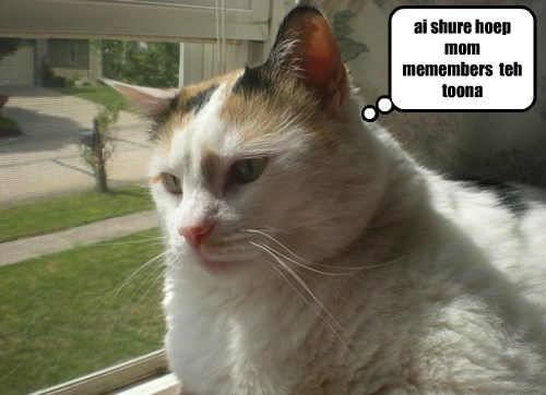 Star can haz a worry.