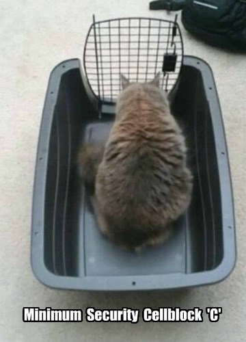 cat carrier,funny,gate,captions
