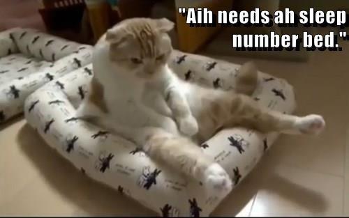 """Aih needs ah sleep                                                                                                                            number bed."""