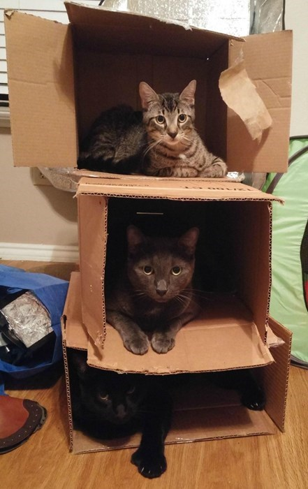 funny cats image You Got One of Those New High Rise Catpartments, Huh?