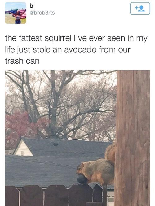 Who Throws Out a Whole Avocado?!