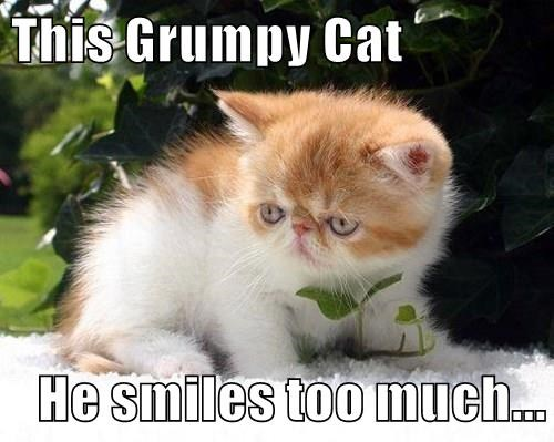 This Grumpy Cat  He smiles too much...