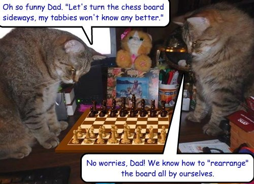 Chess master tabbies