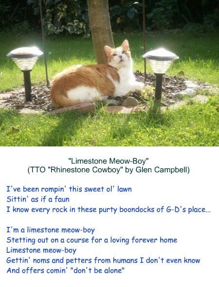 """""""Limestone Meow-Boy"""" (TTO """"Rhinestone Cowboy"""" by Glen Campbell)"""