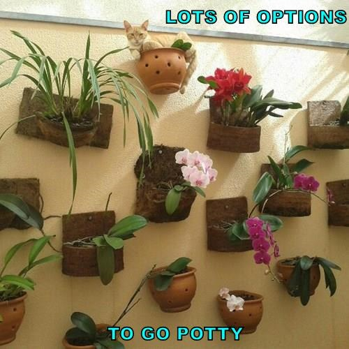 LOTS OF OPTIONS  TO GO POTTY