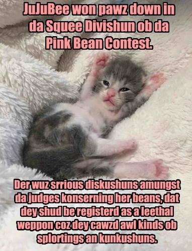 A winner of da Pink Bean Contest at Kamp KuppyKakes