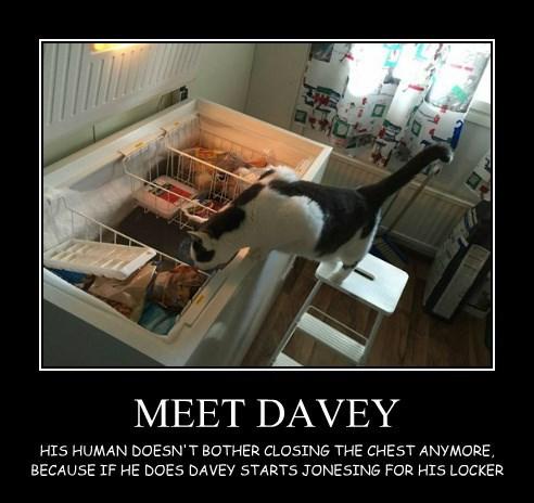 MEET DAVEY