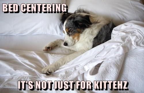 BED CENTERING  IT'S NOT JUST FOR KITTEHZ