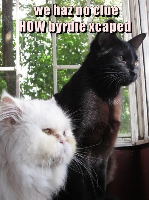 we haz no clue                          HOW byrdie xcaped