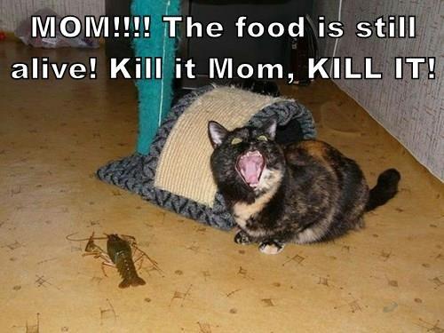 MOM!!!! The food is still alive! Kill it Mom, KILL IT!