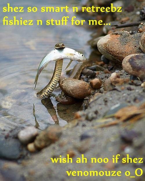 shez so smart n retreebz fishiez n stuff for me...  wish ah noo if shez venomouze o_O