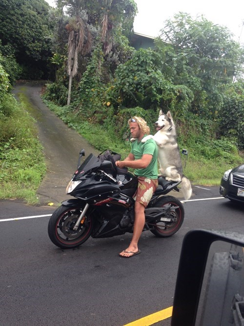 funny dogs image Born to Be Wild
