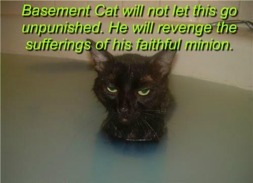 basement cat,Cats,funny