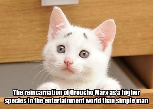 Groucho Kitty