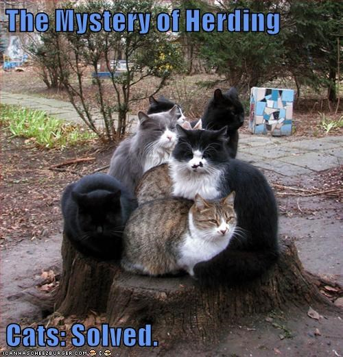 The Mystery of Herding  Cats: Solved.