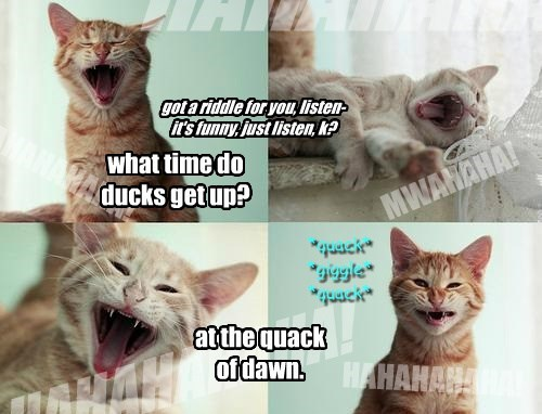what time do ducks get up?