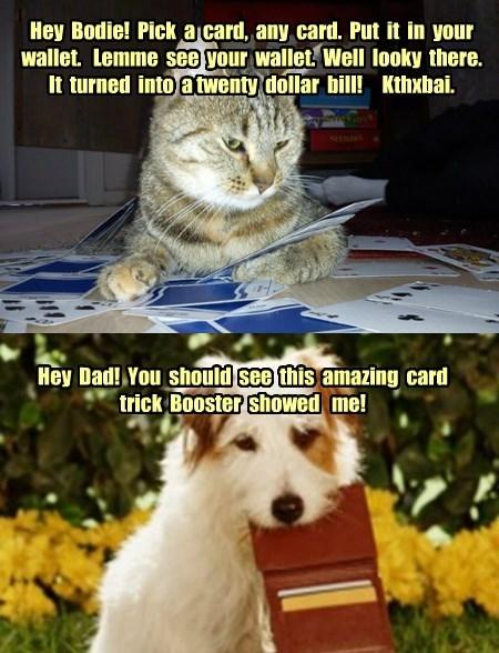 Gullible dog is gullible