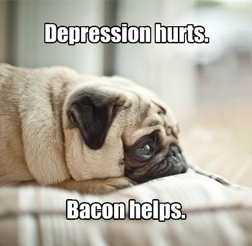 dogs,depression,caption,bacon