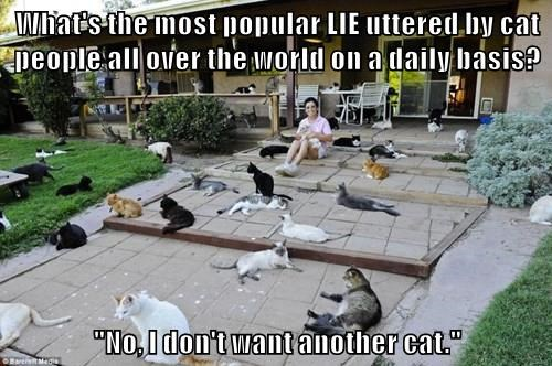 """What's the most popular LIE uttered by cat people all over the world on a daily basis?  """"No, I don't want another cat."""""""