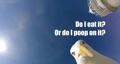 Gulls ask the hard philosophical questions
