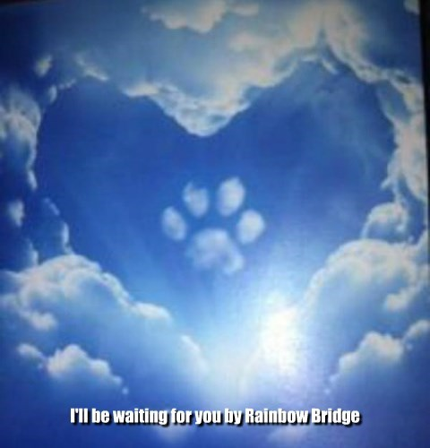For all who lost 'fur-babies'