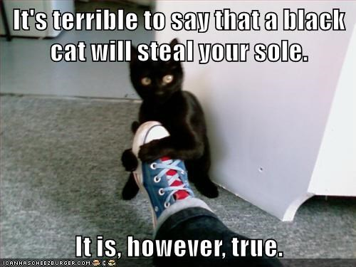 It's terrible to say that a black cat will steal your sole.  It is, however, true.