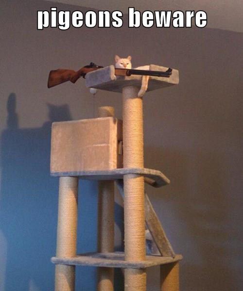 pigeons beware