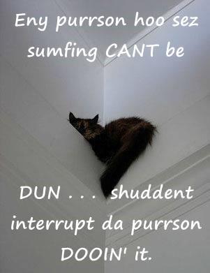 cat,person,interrupt,shouldnt