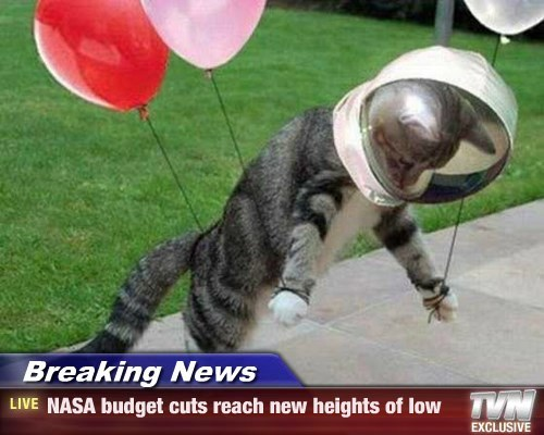 Balloons,caption,Cats,funny