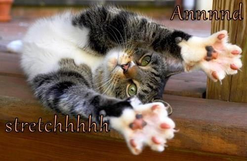 Annnnd  stretchhhhh