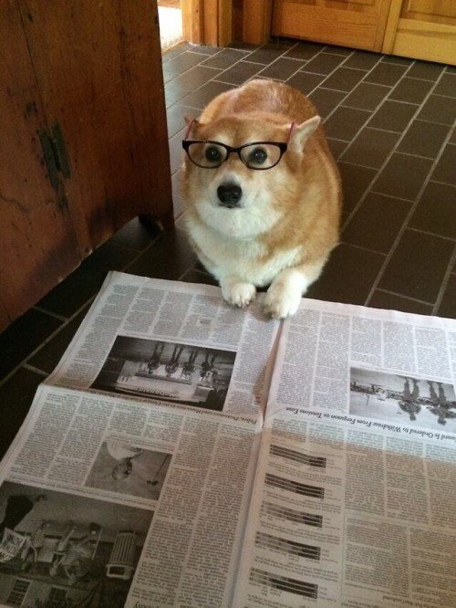 funny dogs image Did You Read This?