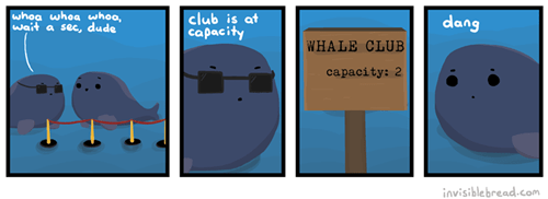 Welcome to The Whale Club