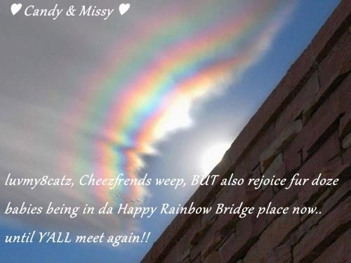 ♥ Candy & Missy ♥  luvmy8catz, Cheezfrends weep, BUT also rejoice fur doze babies being in da Happy Rainbow Bridge place now.. until Y'ALL meet again!!