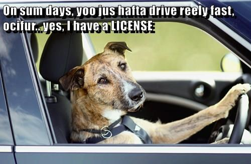 On sum days, yoo jus hafta drive reely fast, ocifur.. yes, I have a LICENSE