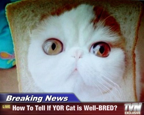 Breaking News - How To Tell If YOR Cat is Well-BRED?