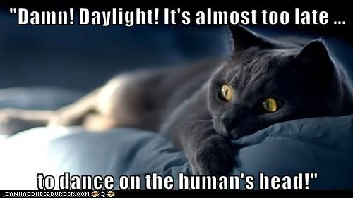 """Damn! Daylight! It's almost too late ...  to dance on the human's head!"""