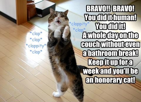 BRAVO!!  BRAVO! You did it human! You did it! A whole day on the couch without even a bathroom break! Keep it up for a week and you'll be an honorary cat!