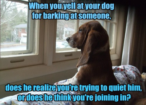 Canine Questions