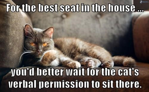 For the best seat in the house ...  you'd better wait for the cat's verbal permission to sit there.