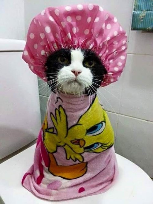 funny cats image How Dare You, I Just Got Out of the Shower!
